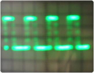 keskeny2 2.4.1.11.1. Lemezes elektrolizáló 1