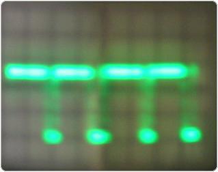 szeles2 2.4.1.11.1. Lemezes elektrolizáló 1